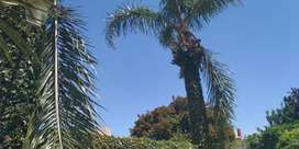 Poda y extracción de árboles en general, palmeras, pinos
