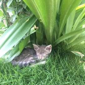 Alguién quisiera adoptar a este gatito?