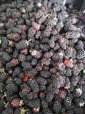 Frutiandes