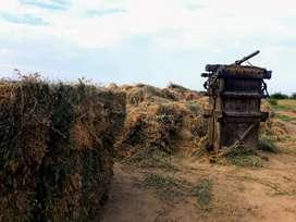 Alfalfa seca en pacas