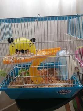 Jaula para hamster a precio NEGOCIABLE  (incluye accesorios)