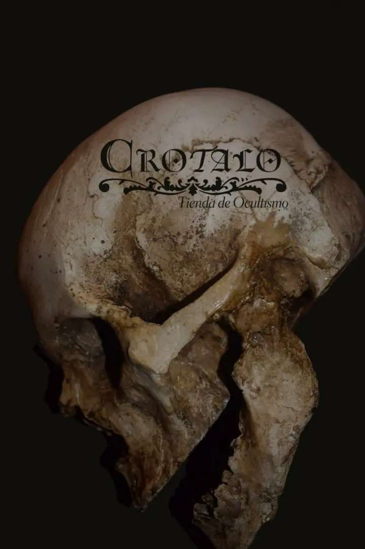 Calavera / Cráneo en yeso