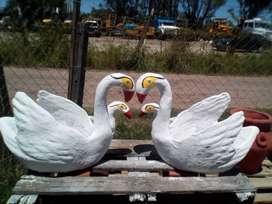 cisnes grandes