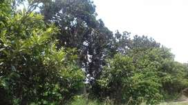 TERRENO AGRICOLA EN GUAYABAL DE 3945M2 EN HUAURA