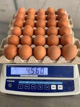 Cbeta huevos bjo costo w