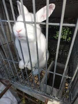 Conejos vendo
