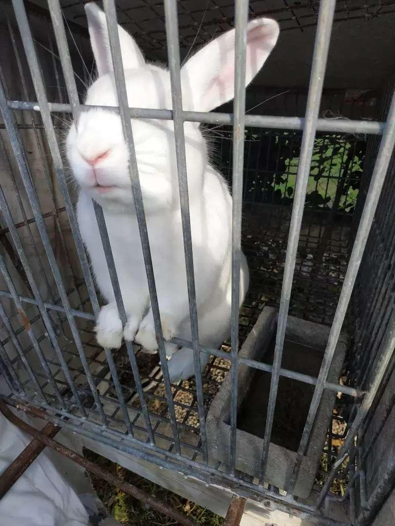 Conejos vendo 0