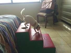 PRACTICA Y COMODA escalera para su mascota adorada