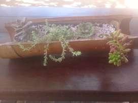 Maceta de Bambu con 4 suculentas distintas