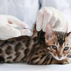 Urgencia veterinaria a domicilio