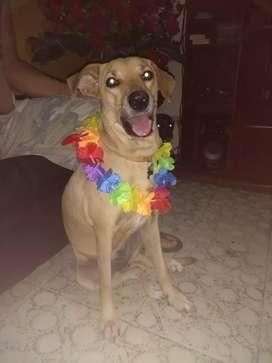 Hermosa perrita de 1 año para adopción