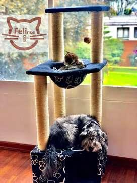 Gimnasios y repisas para gatos