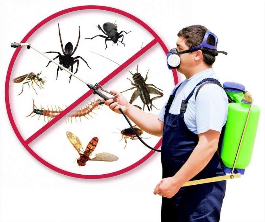 Fumigaciones contra todo tipo de plagas 0