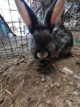 Conejos de 4 meses