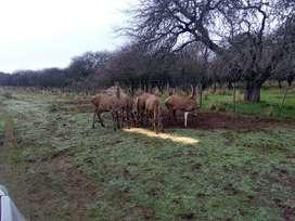 Venta o permuta de campo ganadero todo monte en La Pampa