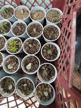 Cactus Y Suculentas Pequeños