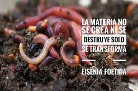 Lombriz roja californiana empezar casero, lombricultivo y abonos de lombriz Domicilios