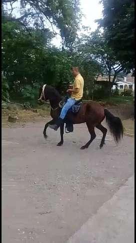 Venta  de caballos para montar y de trabajo