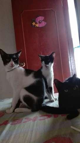 Se Dan en Adopción  Gatitos Y Gatita