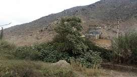 Alquiler de Terreno en Pachacamac zona Manchay Alto - 00748