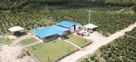 finca agricola 24 hectareas