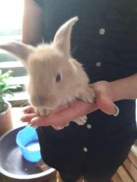 Vendo Conejos Bebes