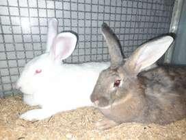 Venta jaulas y conejos