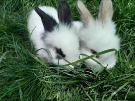 Remato-Conejos mascotas