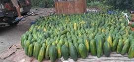 Venta de Papayas ( Brillosa)