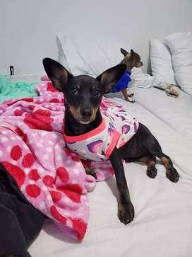 En adopcion perro : josefina (criolla)