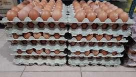 Venta de huevos por menor y mayor