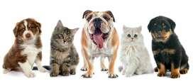 Cuido Y Paseo Tu Mascota
