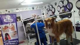 curso de peluquería felina y canina personalizado