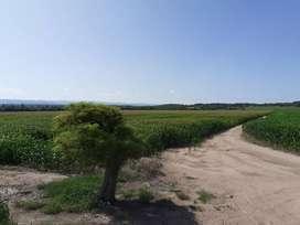 Córdoba Jesús María 277 hectáreas agrícolas
