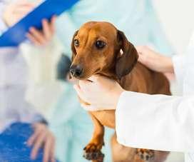Servicio veterinario