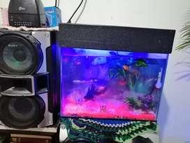 Vendo hermoso acuario tapa luz