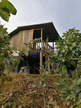 Se vende finca de cacao 6.8 de terreno 3 hectaria de cacao el resto montaña  con abseso pribado abundante agua  pura