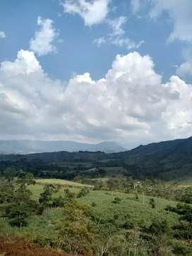 vendo finca 9 hectáreas a 5 kms de mogotes Santander