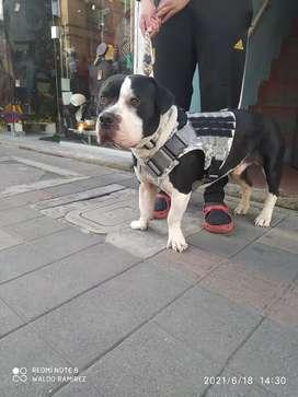 Chaleco pechera para perros