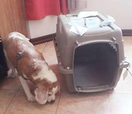 Kennel o Jaula para transportar perros de raza mediana