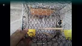 Pepitero con trampera de 3 redes sin usar la trampera