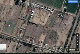Venta terreno 2 hectáreas en Las Paredes, San Rafael, Mendoza