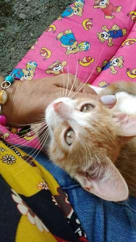 Gatito dorado