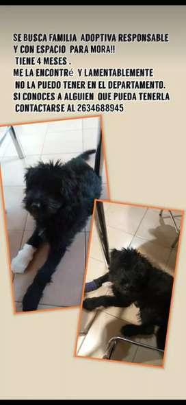 Regalo Perrita rescatada, cachorra, tenía lastimada la pata, ya está hermosa y en perfecto estado