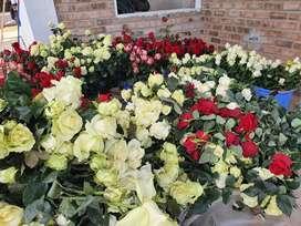 Rosas variedad cajamarca la Encañada