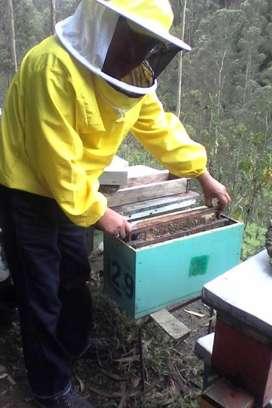 nucleos con  abejas semimansas