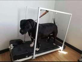 Trotadora electrica para perros