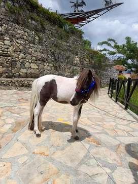 Pony macho
