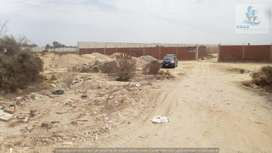 Vendo 77.44has de terreno en Carretera Piura Sullana