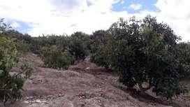 Terreno con plantaciones